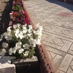 5)Цветочная клумба  г.Караганда