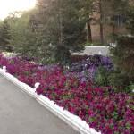 17)Цветочная клумба г.Караганда